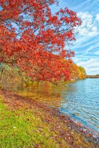 Peak Leaf Season