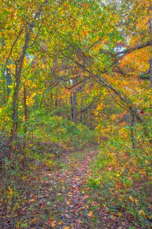 Still Woods in Autumn