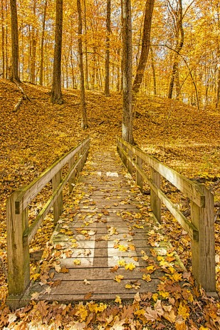 Trail Bridge at End of Autumn