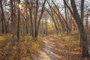 Trail Ten in November