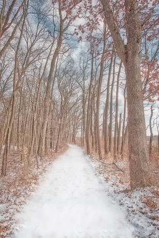 Cowles Bog Trail Following Early Snowfall