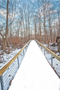 Cowles Bog Walkway in December Snow