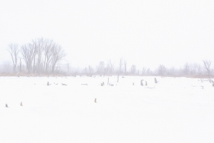 Great Marsh During Fog and Frigid Weather