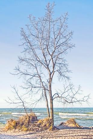 Beach Tree on Warm December Day
