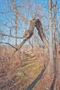 Marsh Trail at Start of December