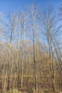 Trees at Start of December