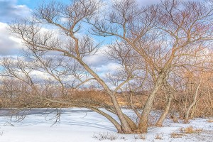 Trees Beside Pond After December Snow