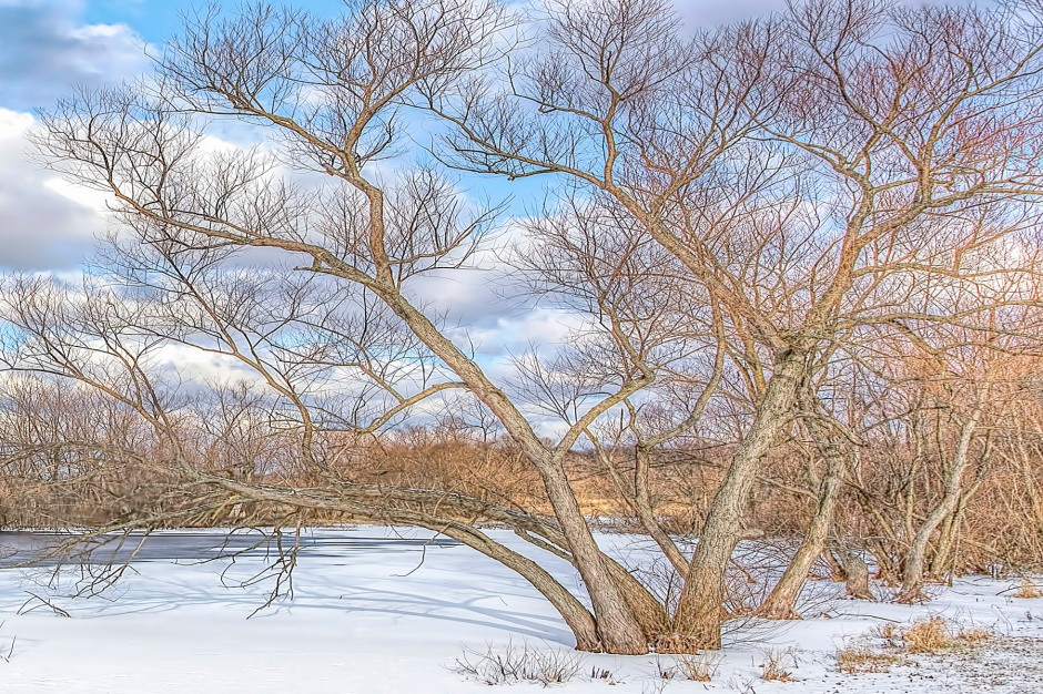 Trees Beside Pond After December Snow
