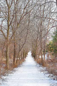 Walk Through Wintry Woods