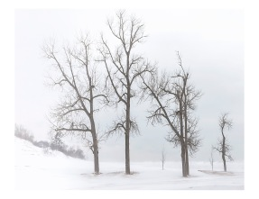 Dune Trees in Winter