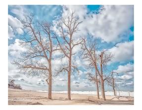 Beach Trees and Shelf Ice