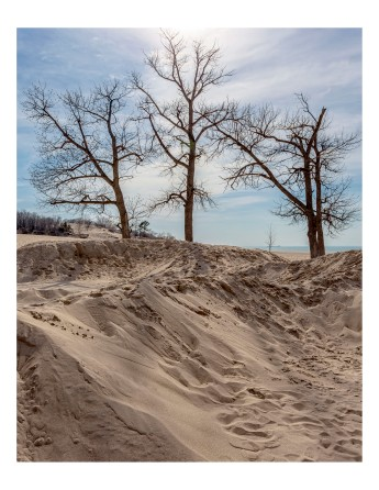 Dune Trees at Easter