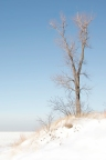 Dune Tree Above Frozen Lake Michigan