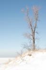 Dune Tree Above Frozen Lake Michigan