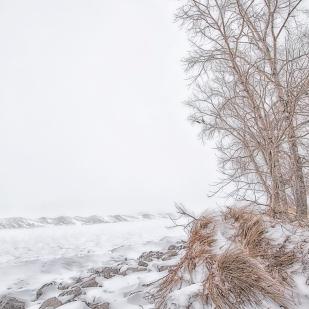 Lakeside Tree and Shelf Ice