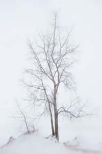 Dune Tree in Fog After Snow