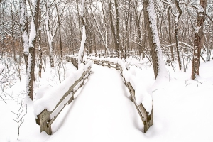 Forest Footbridge After Snowfall