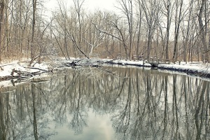 Little Calumet River Trail During Tranquil Thaw