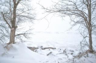 Pair of Trees and Lake Michigan Shelf Ice