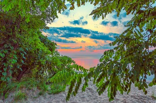 Sunset Through Beach Trees