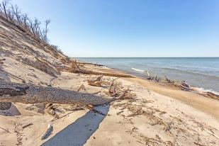 Fallen Trees at Mt. Baldy Beach