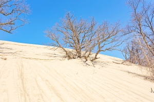 Tree Swallowed by Sand Dune During Winter