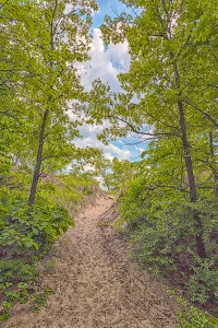 Wooded Trail to Dune Ridge in June