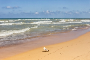 Windswept Surf with Lone Gull