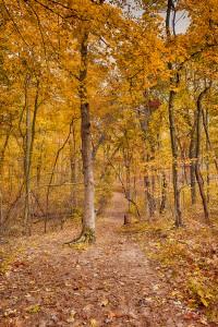 Late Autumn at Trail Ten