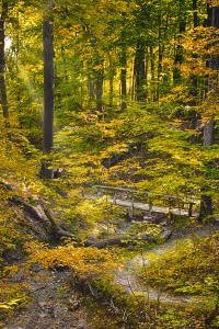 Chellberg Trail in Autumn