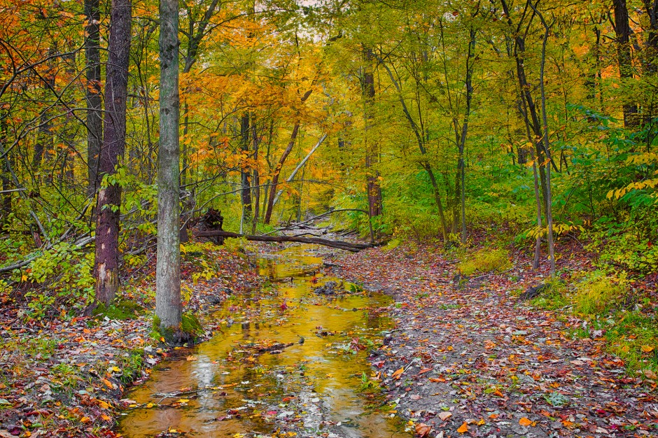 Leaf Fall at Dunes Creek