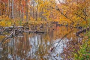 River After Morning Mist