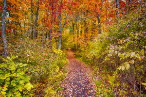 Trail Eight in Autumn