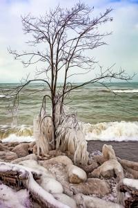 Ice Forming on Beach Tree