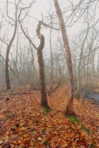 Trail Two in Winter Fog