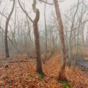 Trail Two in Winter Fog