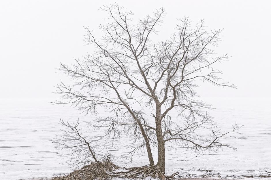 Beach Tree Before Fog Above Lake Michigan