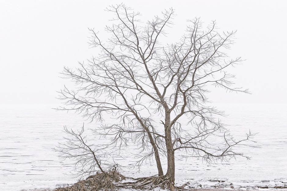 Beach Tree Before Fog Above Lake Michigan