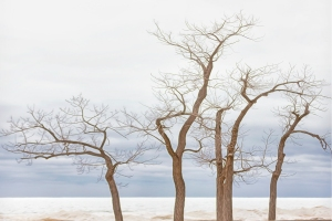 Beach Trees Beside Frozen Lake Michigan