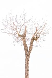 Broken Beach Tree