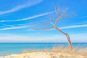 Spring Light Arrives at Indiana Dunes