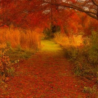 Autumn Path sq