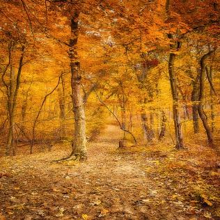 Autumn Trail sq