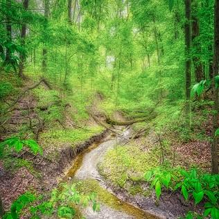 Spring Creek sq