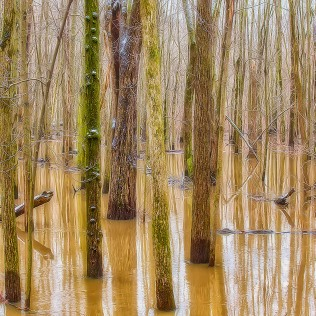 Swamp Forest sq