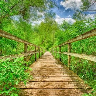 Trail Bridge at End of Summer sq