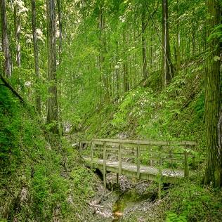 Gully Trail sq