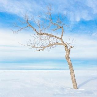 Tree Beside Frozen Lake PR sm sq