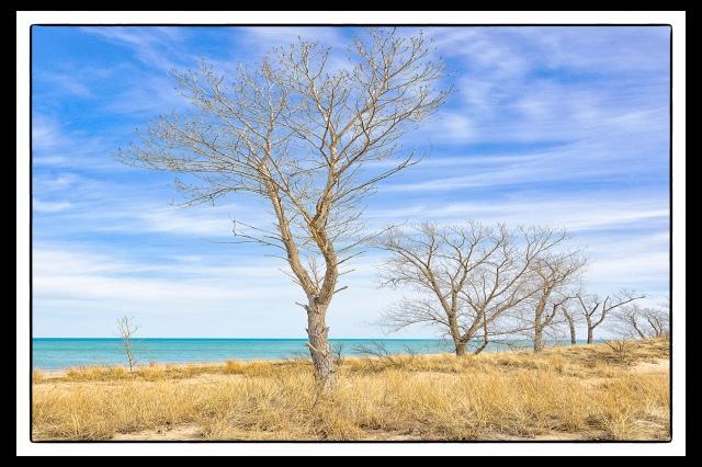 Shoreline Trees PR sm hor