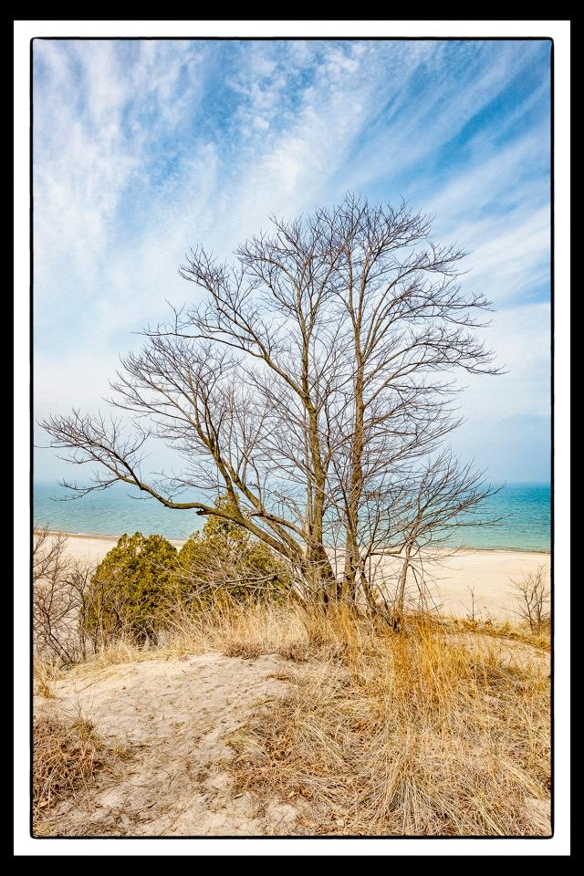 Dune Tree and Lake Haze PR sm